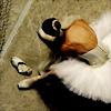 cleo: (Stock: Ballerina)