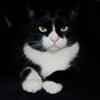 violetcheetah: (butler)