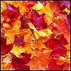 umadoshi: (autumn leaves)