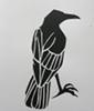 corvi: (crow, papercut)