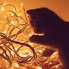 sailorptah: Cat in christmas lights (college lesbian)