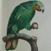 sir_guinglain: (parrot)