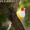 ysabetwordsmith: (Fly Free)